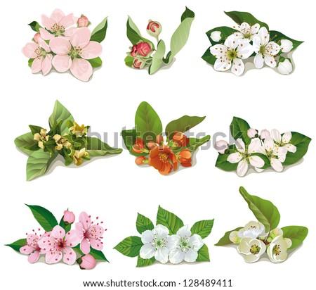 set of flowers on fruit trees