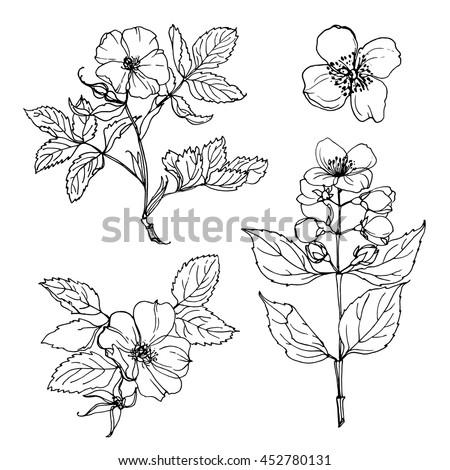 set of flowers painted line on