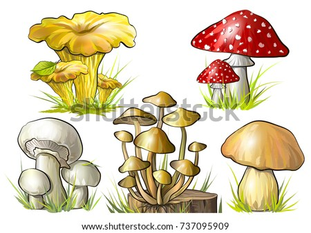 set of forest mushrooms vector