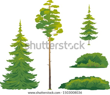 Set of forest trees and bushes, green tall spruce tree, European spruce evergreen coniferous tree, green tall pine tree, white spruce evergreen coniferous tree, green bushes