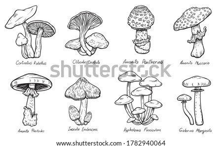 Set of Forest types of poisonous mushrooms collection, edible and non-edible boletus in retro sketch style. All elements isolated.
