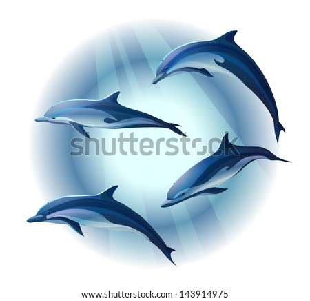 set of four dolphins  vector