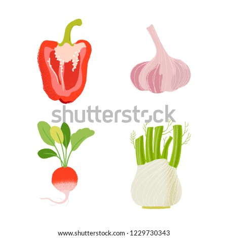 Set of four hand drawn vegetables. Bell pepper, garlic, radish, fennel