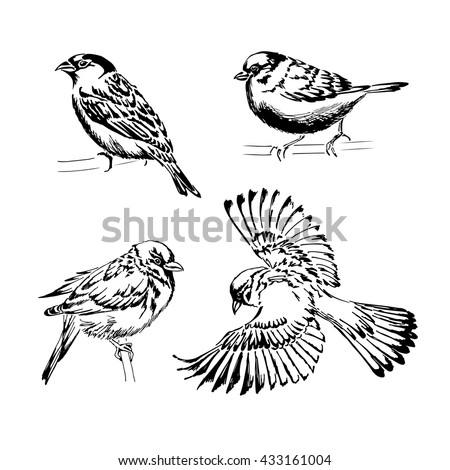 set of four sparrows hand
