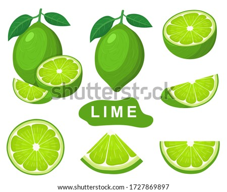 Set of fresh whole, half, cut slice lime fruits isolated on white background. Summer fruits for healthy lifestyle. Organic fruit. Cartoon style. Vector illustration for any design.