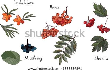 set of garden berries and