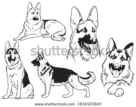 Set of german shepherd. Collection of purebred dogs. Vector drawing of a fur pet. Fluffty animals. Service puppy. Tattoo. Foto stock ©