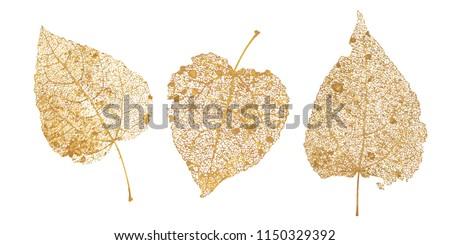 set of golden leaves skeletons