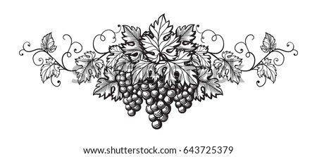Set of grapes monochrome sketch. Hand drawn grape bunches.