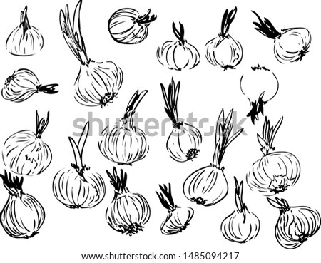Set of graphical sketched onions. isolated hand drawn in black lines onion on a white background. Different shape and size onion. Simple design is perfect for decorations of cookbook and prints