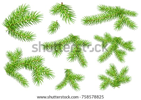 Set of green fluffy fir pine branches isolated on white background. Vector nature xmas illustration #758578825