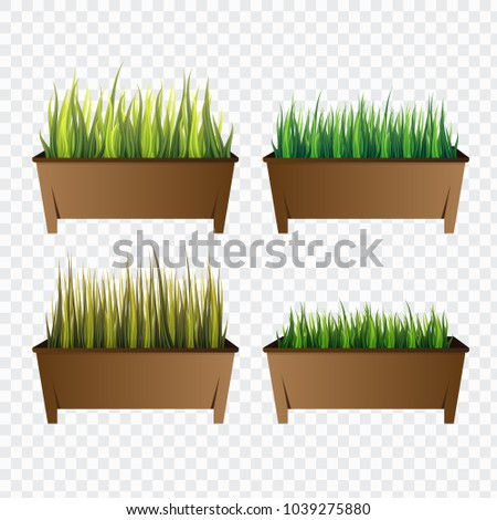 set of green grass in pots on