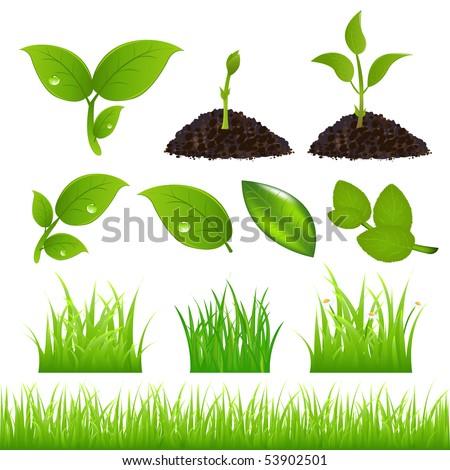 set of green leaves  grasses