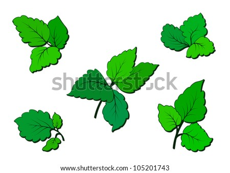 Set of green leaves isolated on white, vector illustration. Raster version available in my portfolio