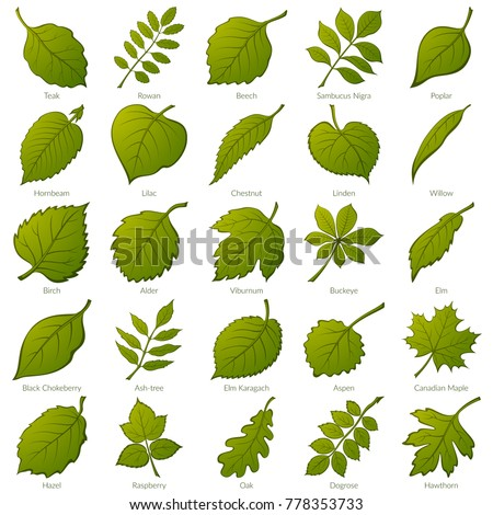 set of green leaves of various