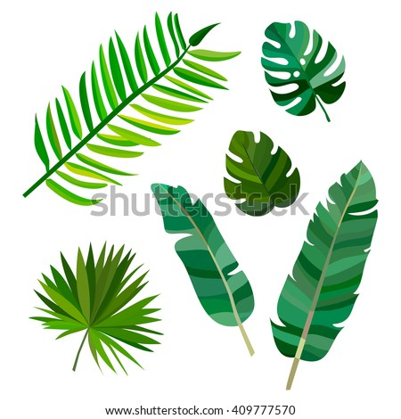 Set of green palm leaves with hawaii on white background. Vector hawaii leave illustration eps10