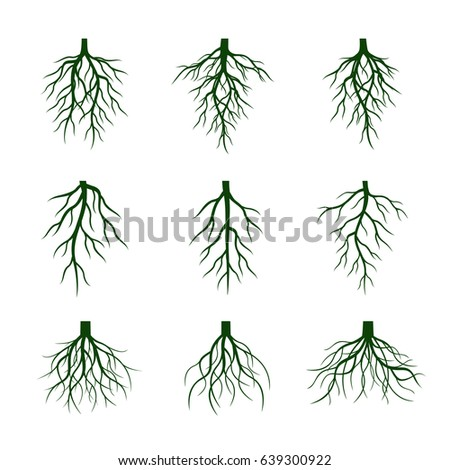 Set of Green Roots. Vector Illustration.