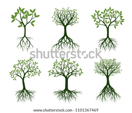 Set of green Trees with naked root. Vector Illustration. Plants and garden.