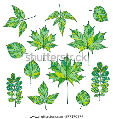 set of green vector leaves