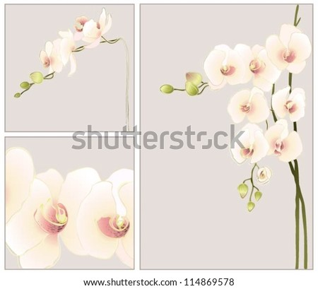 Set of greeting cards with  orchid.