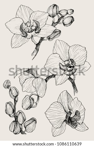 Set of hand drawn black outline orchid on a white background isolated. Highly detailed vector illustration. Beautiful exotic flower. Cymbidium #1086110639