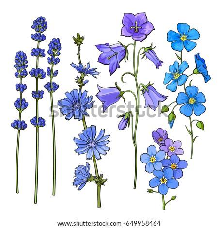 set of hand drawn blue flowers