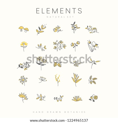 set of hand drawn botanical