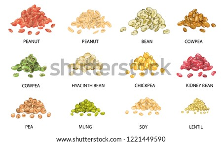 Set of hand drawn colored piles of beans seeds isolated on white. Peanut, bean, cowpea, chickpea, kidney bean, pea, mung, soy, lentil.  Stylized vector illustration.