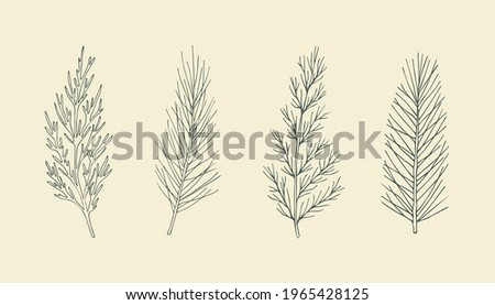 Set of hand drawn conifers. Cypress, pine, cedar, spruce illustration