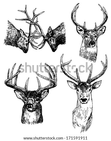 Set of hand drawn deer heads Sketch drawing Vector illustration on white background