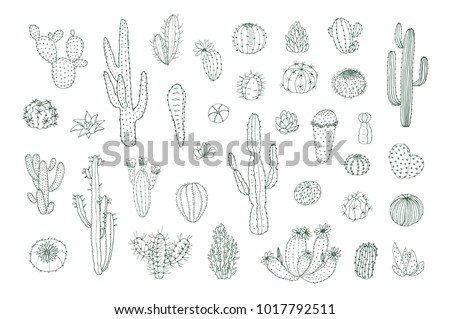 Set of hand drawn different line cactuses in sketchy doodle style. Vector illustration.