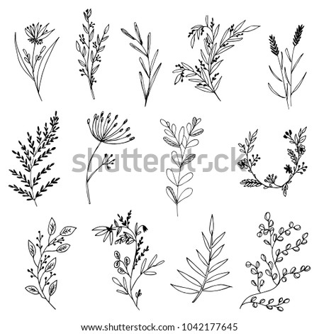 Set of hand-drawn floral elements, plants and flowers. Isolated branches on a white background. Sketchy elements of design. Vector illustrations.