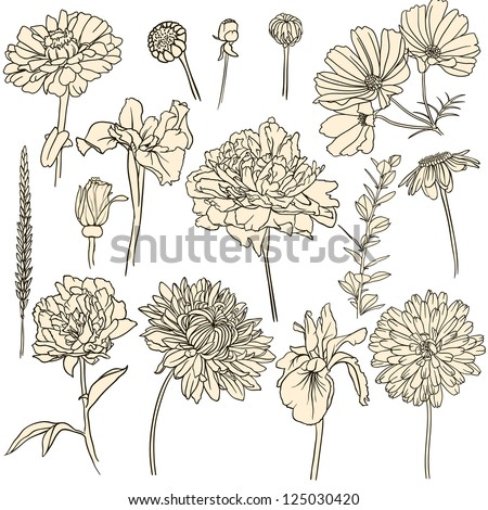 Set of hand drawn flowers.