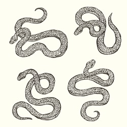 Set of hand drawn graphic snakes