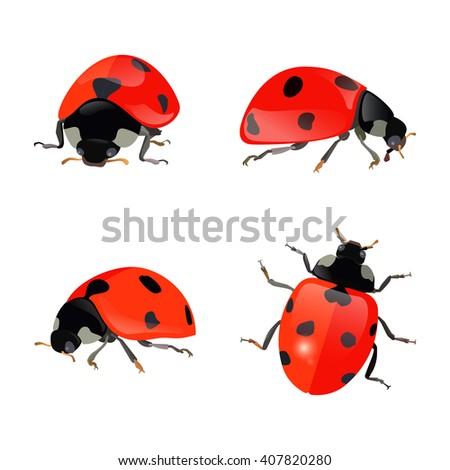 set of hand drawn ladybugs