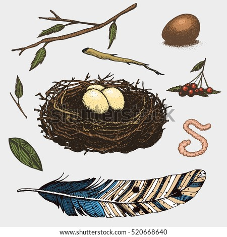 set of hand drawn nest leaves