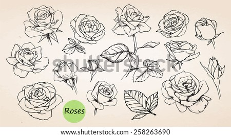 set of hand drawn roses  vector