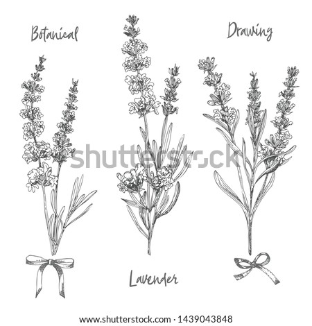 Set of hand drawn sketch of Lavender flower and cute bows isolated on white background. Vintage vector illustration. France provence retro pattern for romantic fresh design concept. Natural lavander Foto stock ©