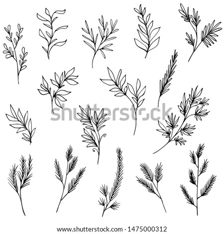 set of hand drawn tree branches