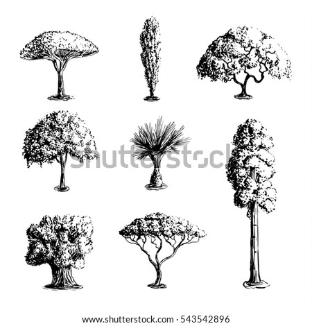set of hand drawn tree sketches