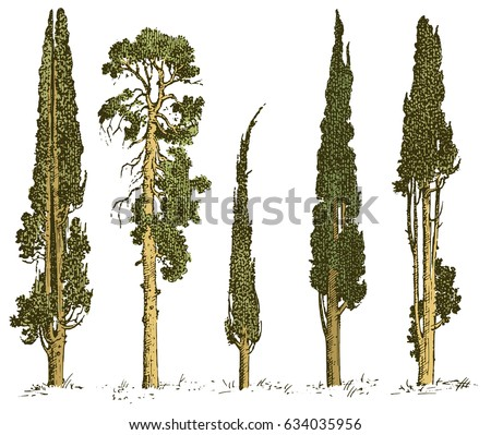set of hand drawn trees italian ...