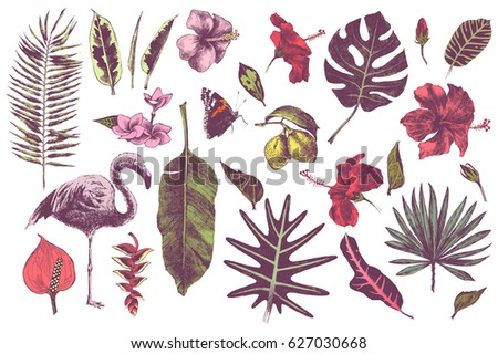 Set of hand drawn tropical leaves, flowers and flamingo. Vector illustration