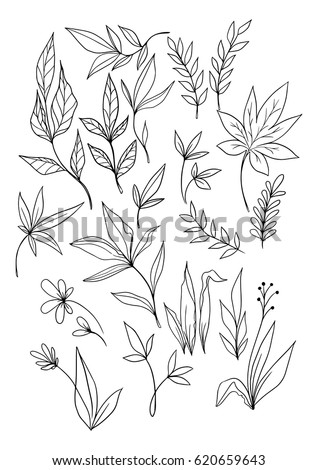Set of hand drawn vector floral elements. Outlined leaves.