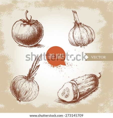 Sliced Onions Drawing Tomato Onion Sliced Cucumber