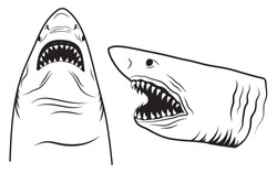 Set of head sharks with open mouth. Collection of silhouettes of predatory swimming marine fish. Fish for logotype. Vector illustration jaws of fish with sharp teeth on white background.