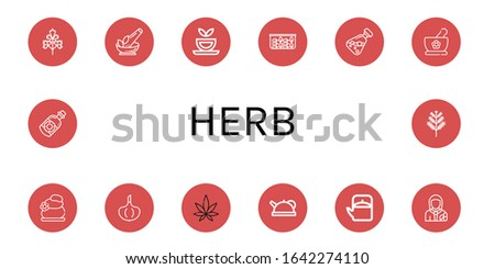 Set of herb icons. Such as Parsley, Herb, Herbal tea, Spinach, Essential oil, Herbs, Lithotherapy, Garlic, Weed, Teapot, Pharmacist, Dill , herb icons