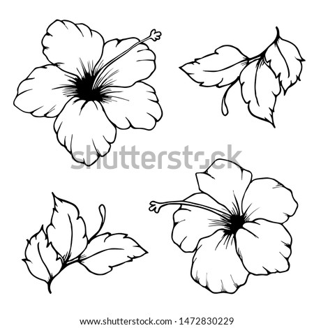 Set of hibiscus flowers and leaves for coloring book. Hand drawn hibiscus flowers. Black outlines of hibiscus flowers and leaves on white background. Beautiful monochrome sketch flowers.