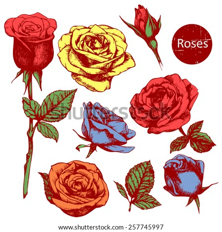 Set Of Highly Detailed Colorful Hand-Drawn Roses. Stock Vector ...