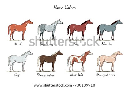 Set Of Horse Color Chart Equine Coat Colors With Text Equestrian Scheme Bay