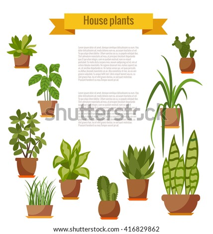set of house plant isolated
